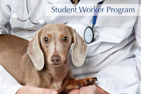 Student Worker Program